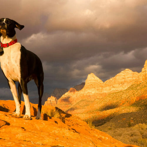 Hiking In Zion With Dogs: The Do's and Don'ts
