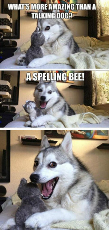 What's more amazing than a talking dog? A spelling bee.