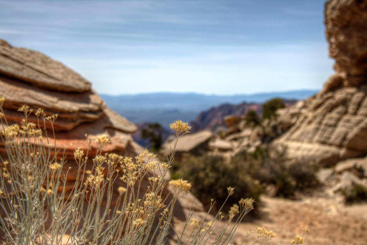 Brush on desert trail