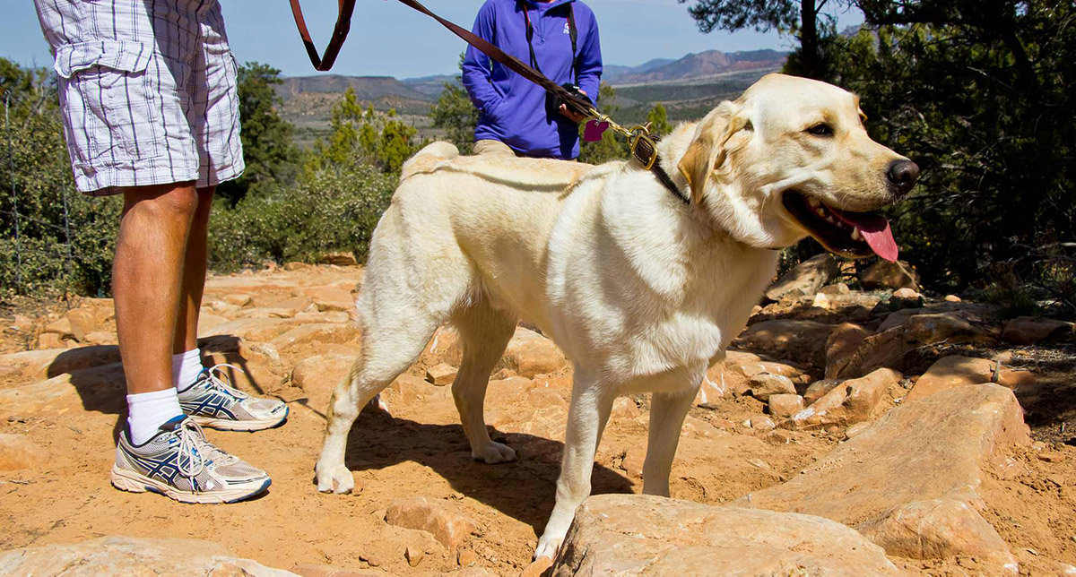 White dog on leash