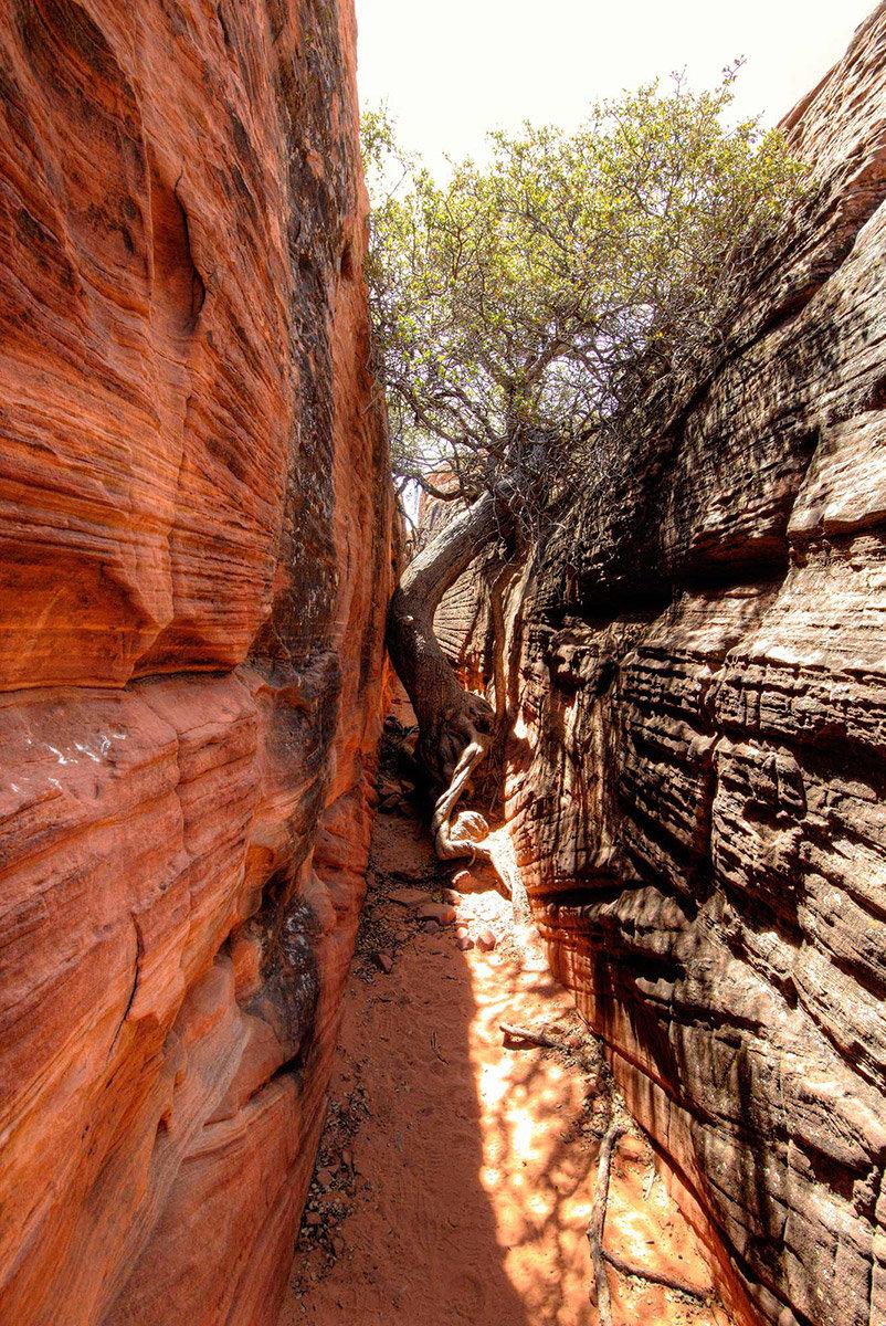 Tree in slot canyon