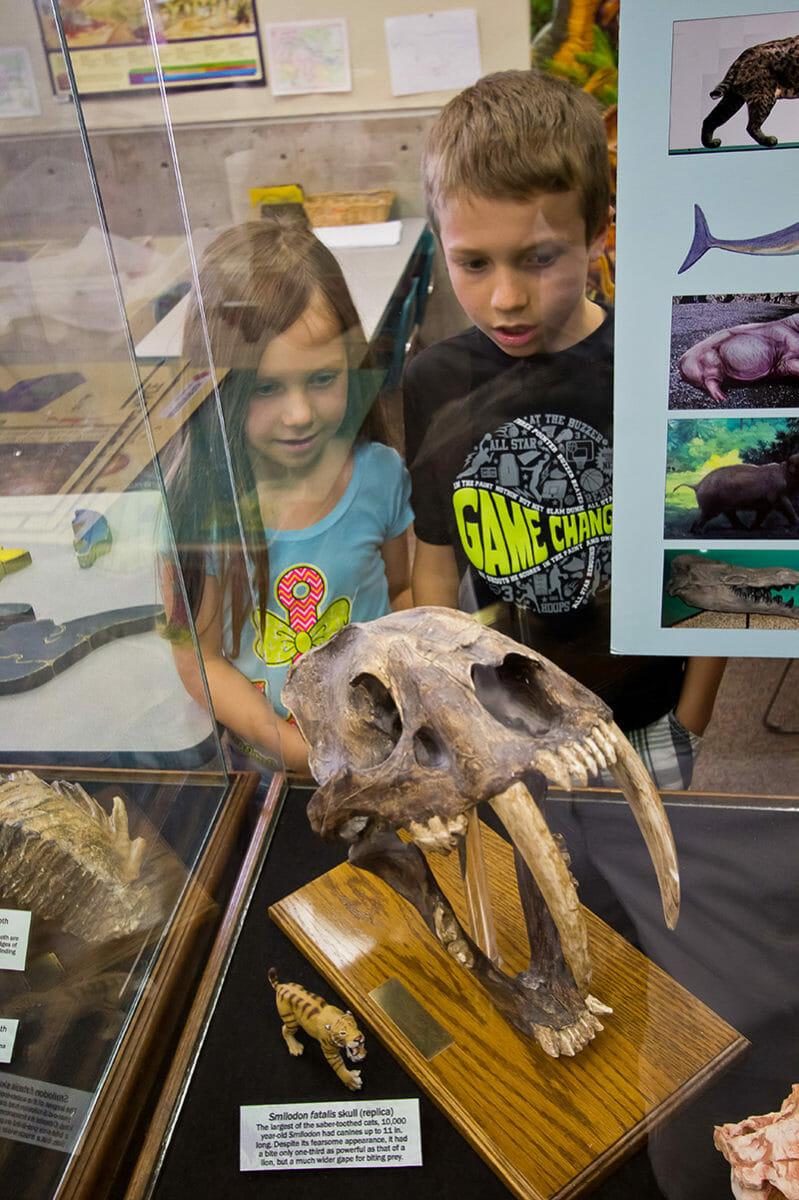 Children gazing through display at fossilized skull.