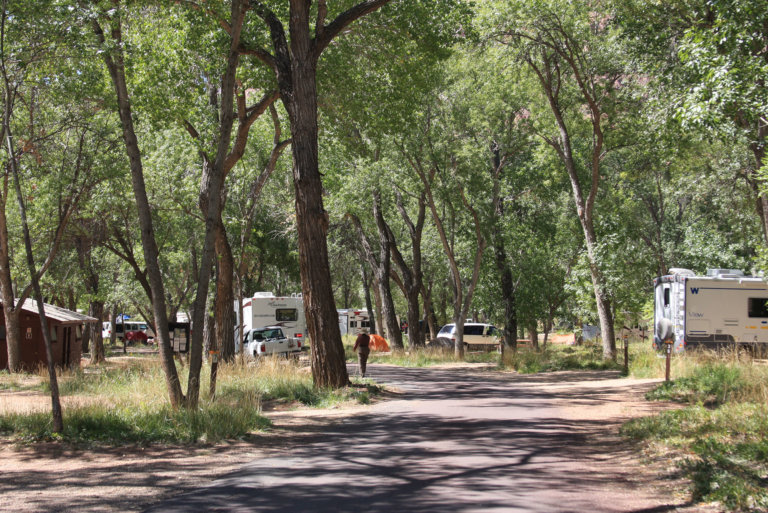 Campground with RVs and pine trees
