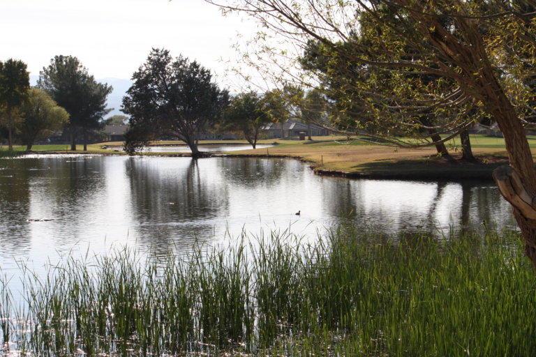 Tree-lined pond on golf course