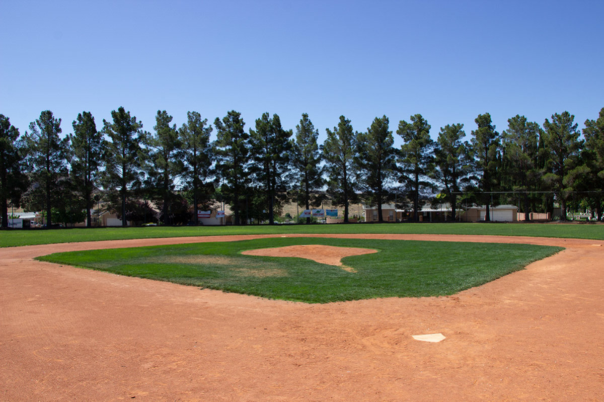 Tree-lined baseball field